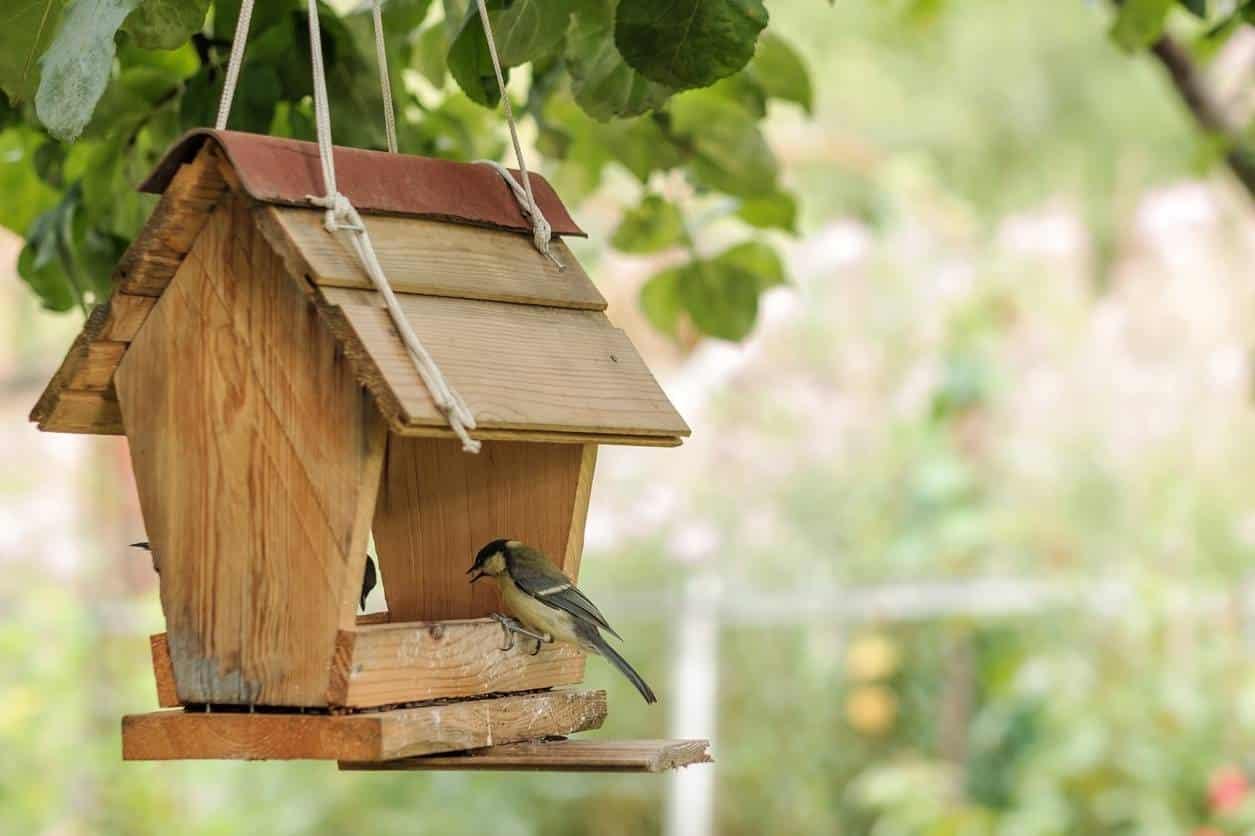 privilégiez la biodiversité pour un jardin accueillant